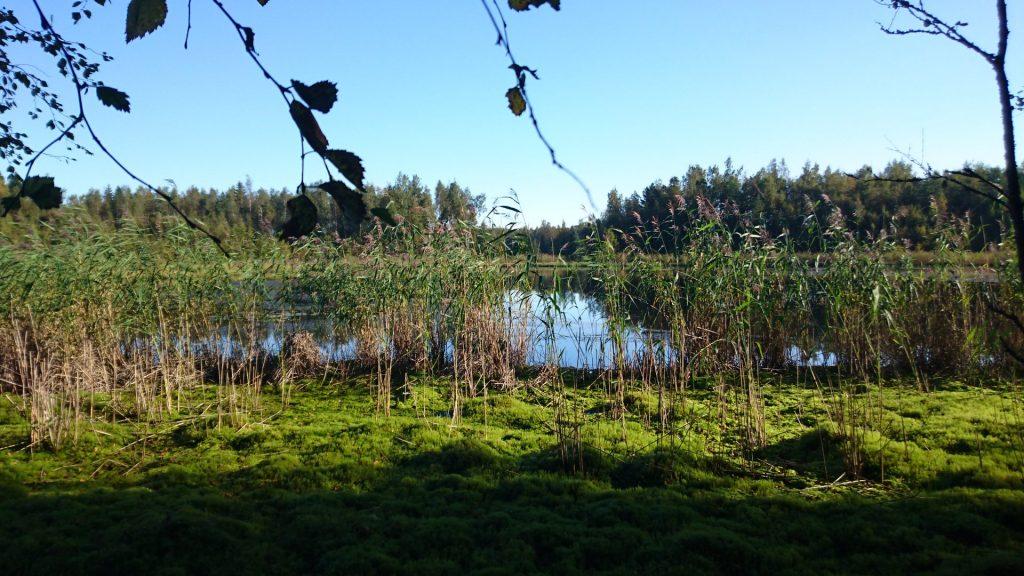 Liten sjö med vass längs Öja skärgårdsled
