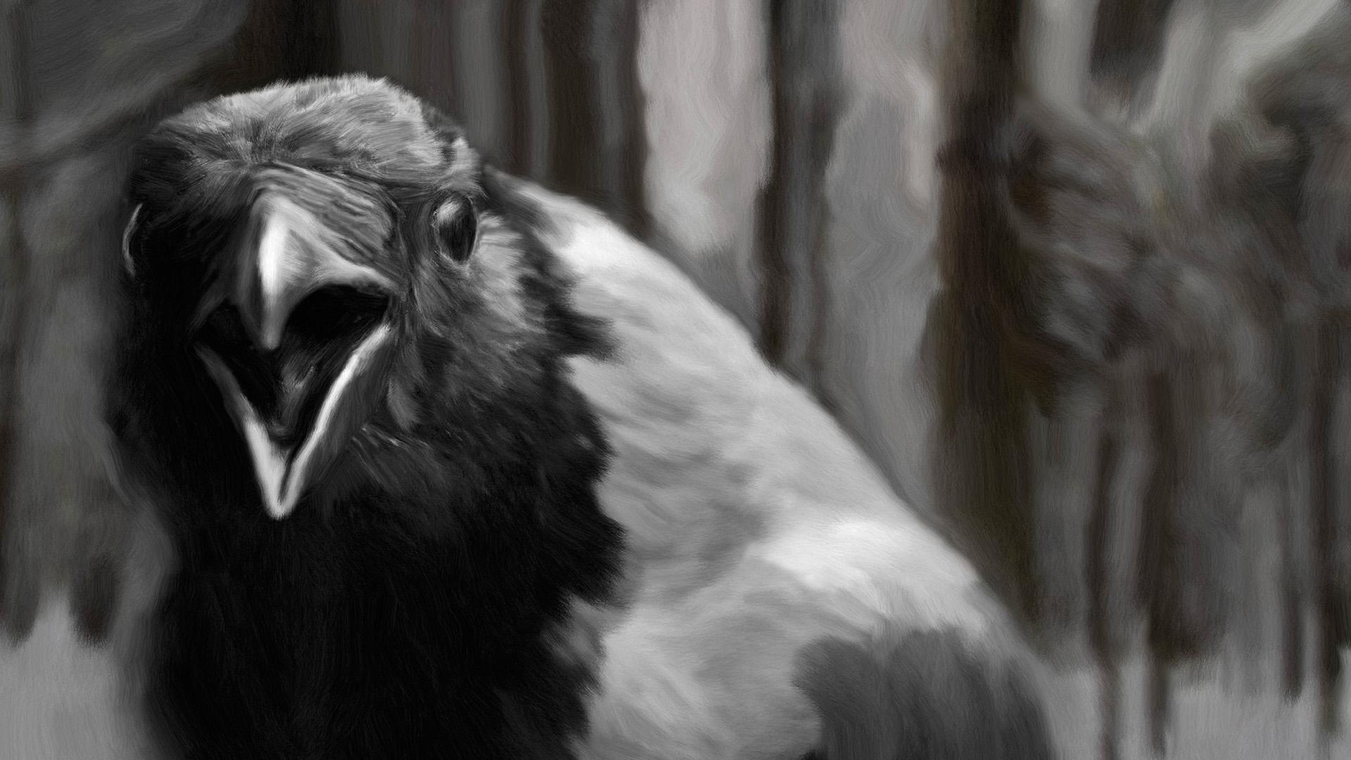 Lähikuva variksesta Veikko Salkion luontokokoelmassa.