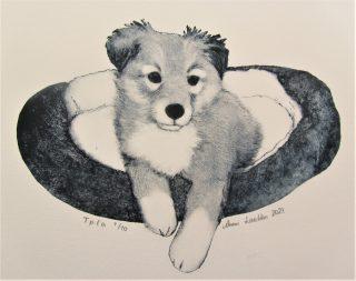 Koiraa esittävä grafiikanvedos.